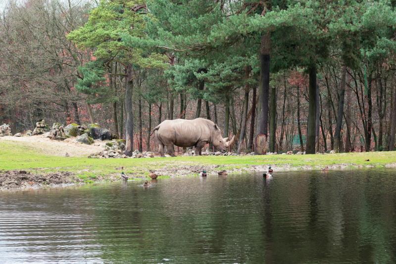 burgers zoo Safari